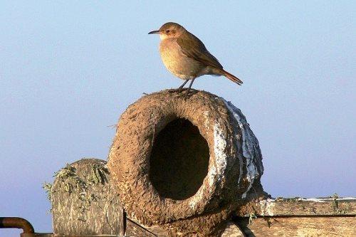 ¿Cuál es el ave nacional de Argentina?