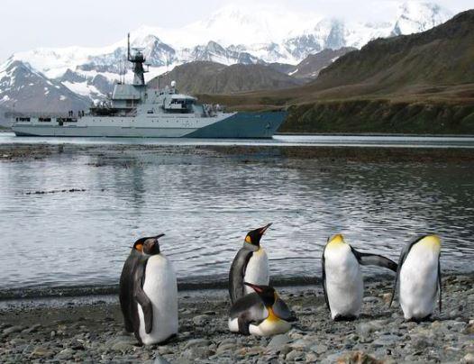 Qué animales hay en las Islas Malvinas